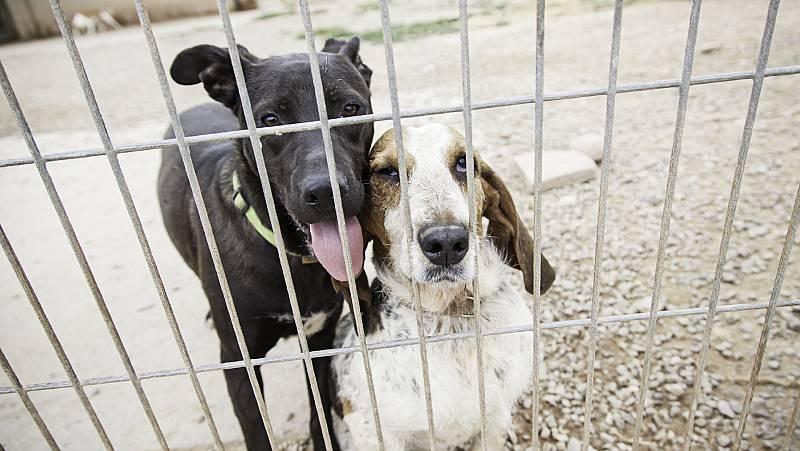 14 Horas Fin de Semana - Las protectoras ofrecen ayuda para los animales de dueños hospitalizados - Escuchar ahora