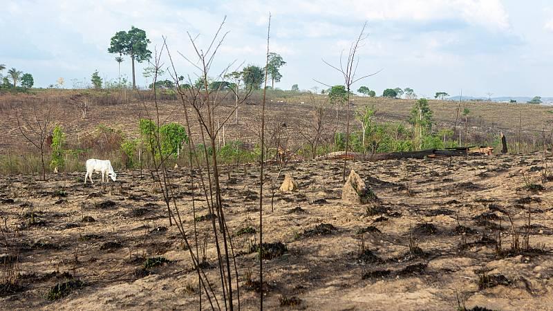 14 Horas Fin de Semana - La destrucción de la naturaleza y el riesgo de pandemias están relacionados según WWF - Escuchar ahora