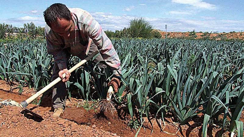 14 horas fin de semana - Las organizaciones agrarias crean una bolsa de trabajo para temporeros - Escuchar ahora