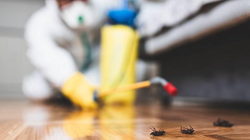 Por tres razones - Plagas de insectos y roedores por el confinamiento - 04/06/20 - escuchar ahora
