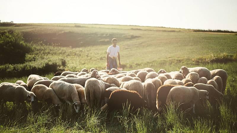 Por tres razones - La ruta de 1.300 ovejas hacia los Picos de Europa - 24/06/20 - escuchar ahora
