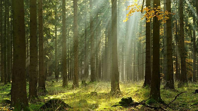 Reserva natural - Árboles que nos enseñan a ver el bosque - 24/06/20 - escuchar ahora
