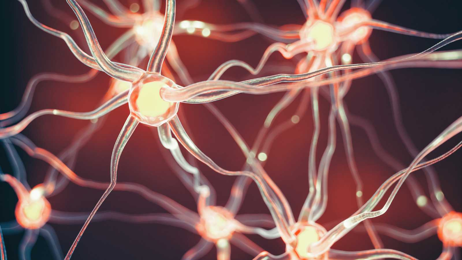 España a las 8 Fin de Semana - Un estudio desvela los biomarcadores del Alzheimer en personas con Síndrome de Down - Escuchar ahora