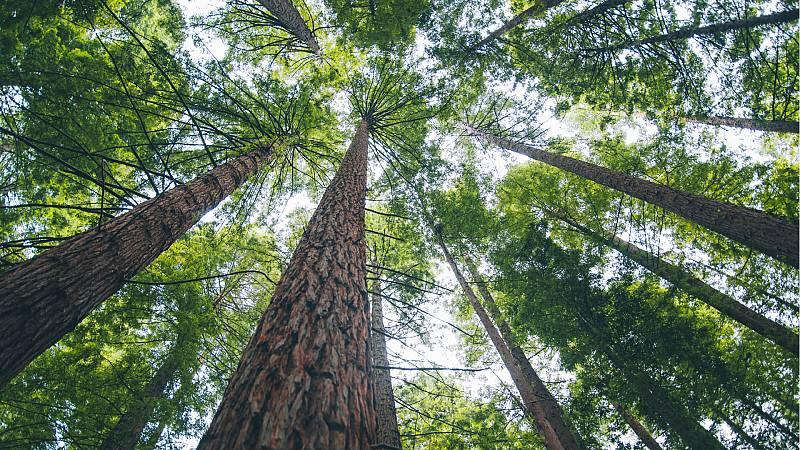 14 horas Fin de Semana - Los árboles milenarios, en peligro debido al riesgo de incendios por las altas temperaturas y el confinamiento - Escuchar ahora