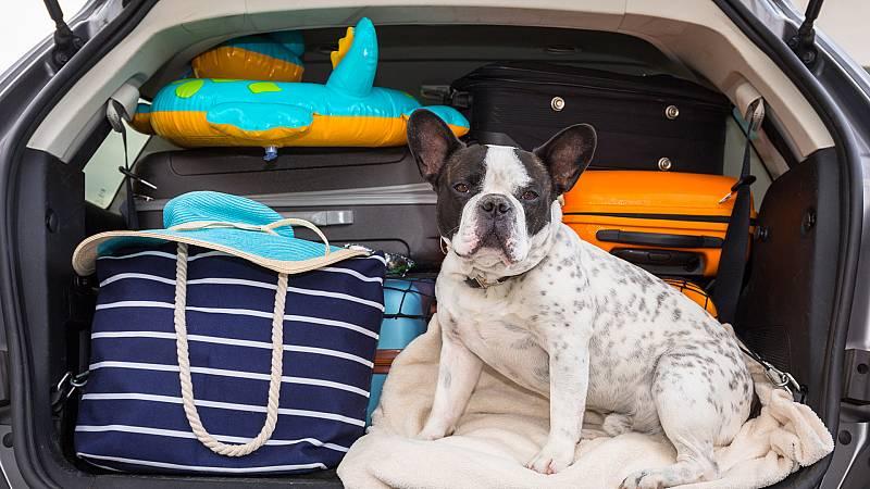 Artesfera - Nuestras mascotas tras la desescalada y en vacaciones - 16/07/20 - escuchar ahora