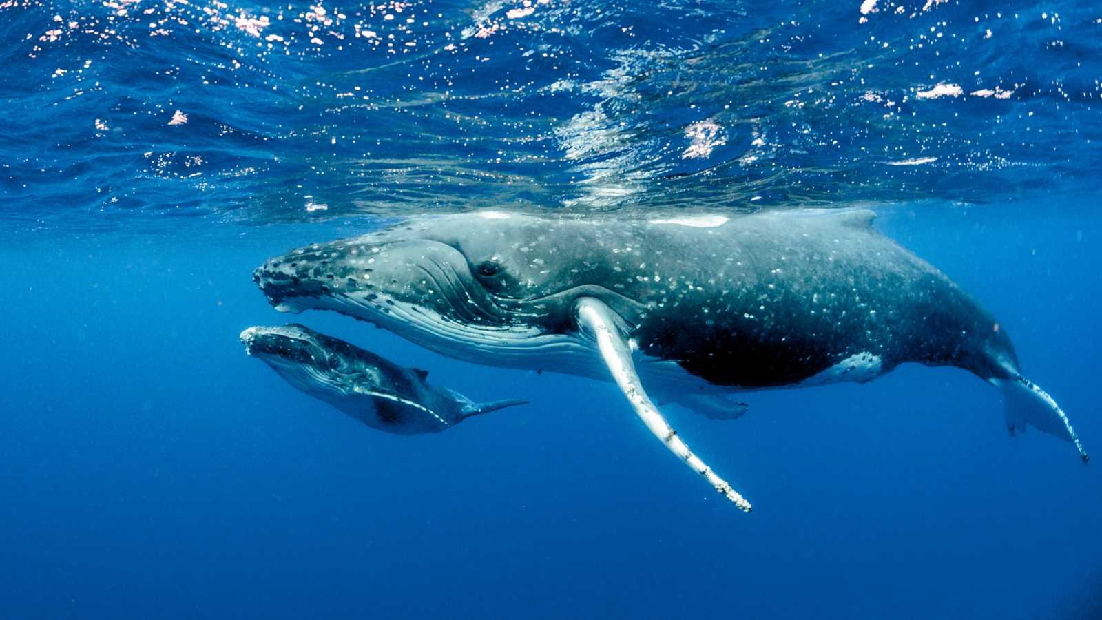 Españoles en la mar - Escuchar la vida marina desde cualquier lugar del mundo - 03/08/20 - escuchar ahora