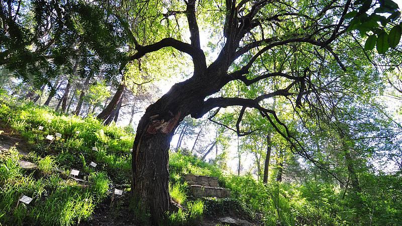 Escapadas - Arboreto Luis Ceballos - 06/08/20 - Escuchar ahora
