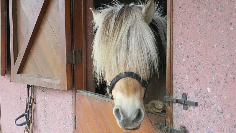 El palabrero - Unos pocos ponis y potros - 11/08/10 - Escuchar ahora -