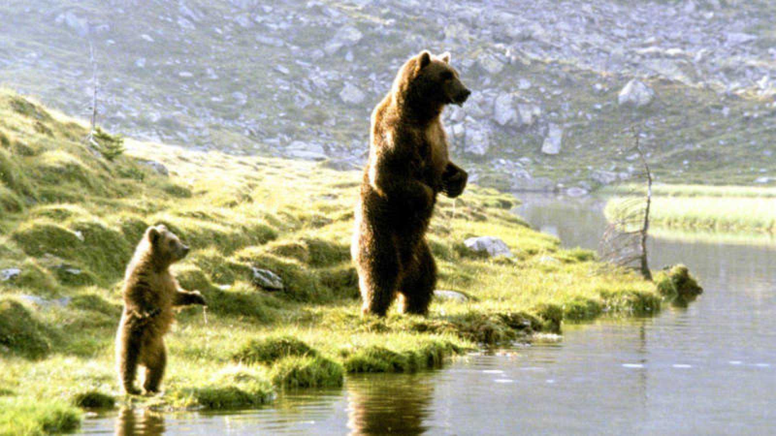 Ruedo escénico - El oso - 15/08/20 - Escuchar ahora