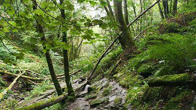 Reserva Natural - La naturaleza nos ayuda a estar sanos - 19/08/20 - Escuchar ahora