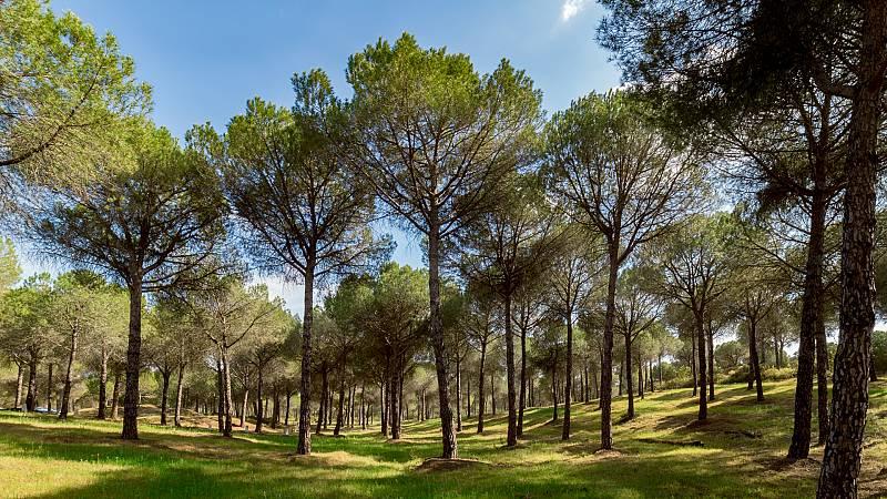 Reportajes Emisoras - Teruel - Pinos resineros - 25/08/20 - Escuchar ahora