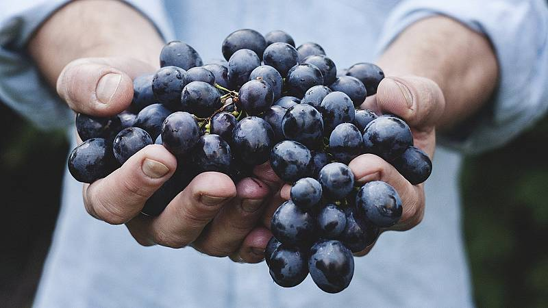 Mundo rural - Vendimia en La Rioja - 26/08/20 - Escuchar ahora