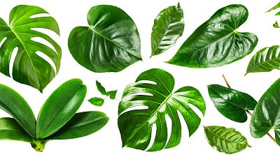 Reserva natural - Crece el impacto de las especies exóticas invasoras - 26/08/20 - Escuchar ahora