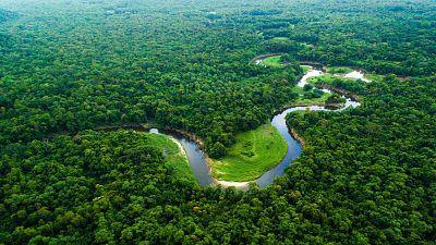 Memoria de delfín - La Amazonia: el pulmón verde de la Tierra - 07/09/2020 - escuchar ahora
