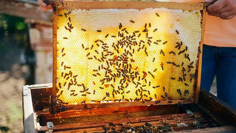 Degustar España - Aceite, miel y vino - 05/09/20 - Escuchar ahora