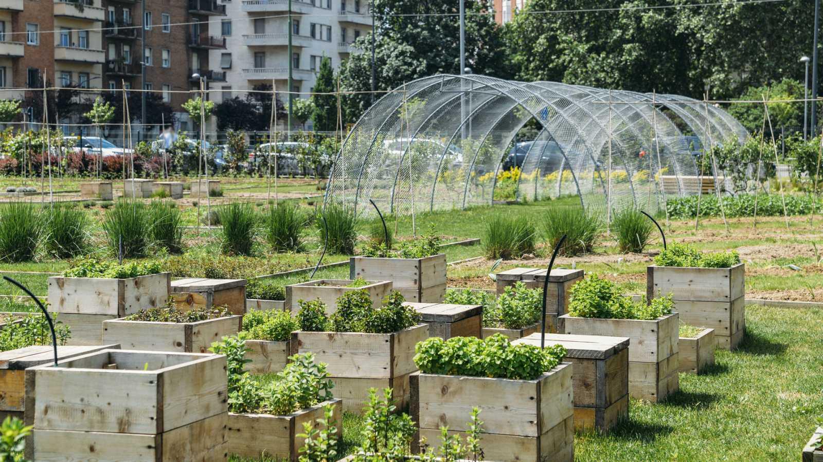 En primera persona - Huertos urbanos ecológicos que favorecen el encuentro entre culturas - 13/09/20 - escuchar ahora
