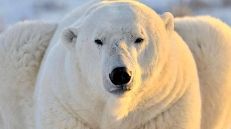 No es un día cualquiera - Ciencia, osos polares y cocretas - Segunda hora - 19/09/2020 - Escuchar ahora