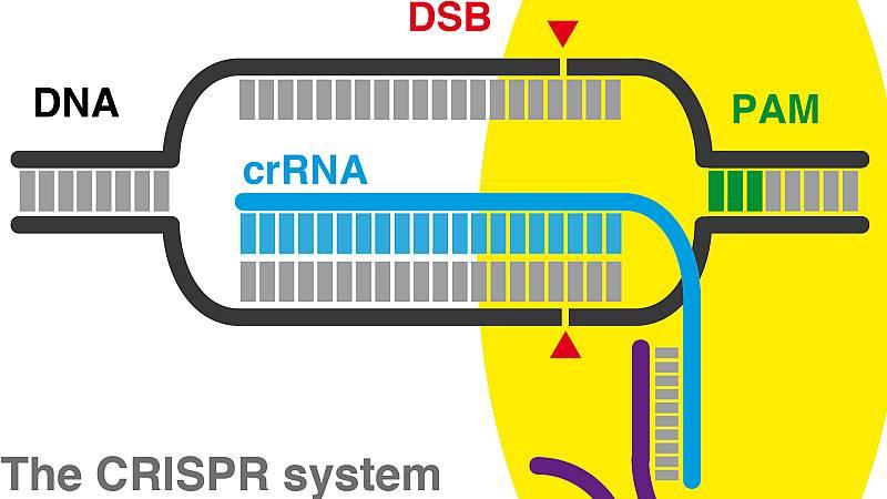 Dos trillones de átomos - Herramientas genéticas CRISPR - 15/09/22 - Escucha ahora