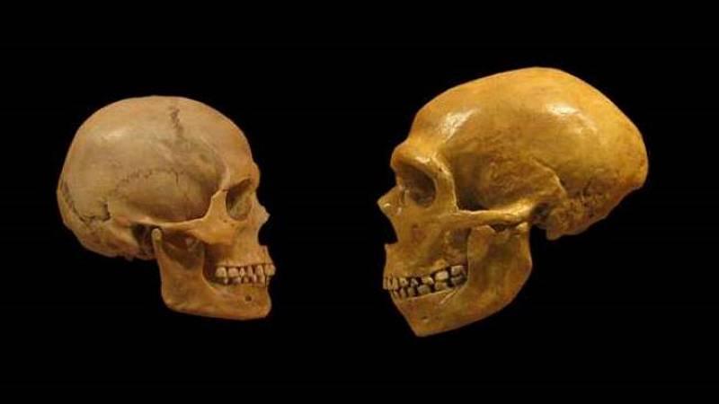 Sapiens - La vida contada por un sapiens a un neandertal - 26/09/20 - escuchar ahora
