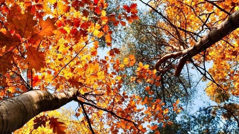 No es un día cualquiera - La llegada del otoño - Patricia F. de Lis - 'Planeta 2050' - 26/09/2020 - Escuchar ahora