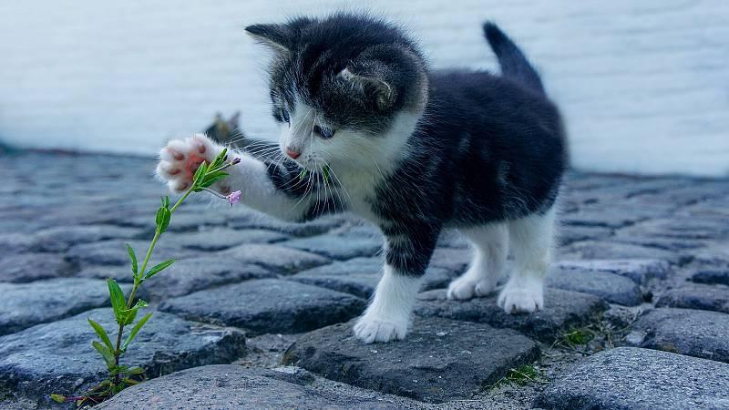 Hoy empieza todo con Marta Echeverría - La vida secreta de los gatos, Almáciga y el festival S8 - 28/09/20 - escuchar ahora