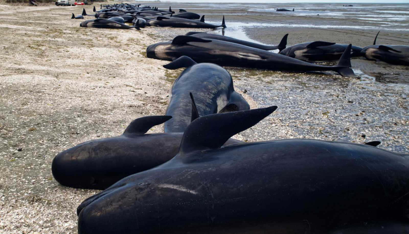 Españoles en la mar - Varamiento de ballenas - 02/10/20 - escuchar ahora