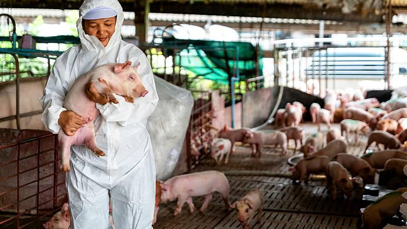 Entre probetas - La peste porcina se acerca peligrosamente - 20/10/20 - Escuchar ahora