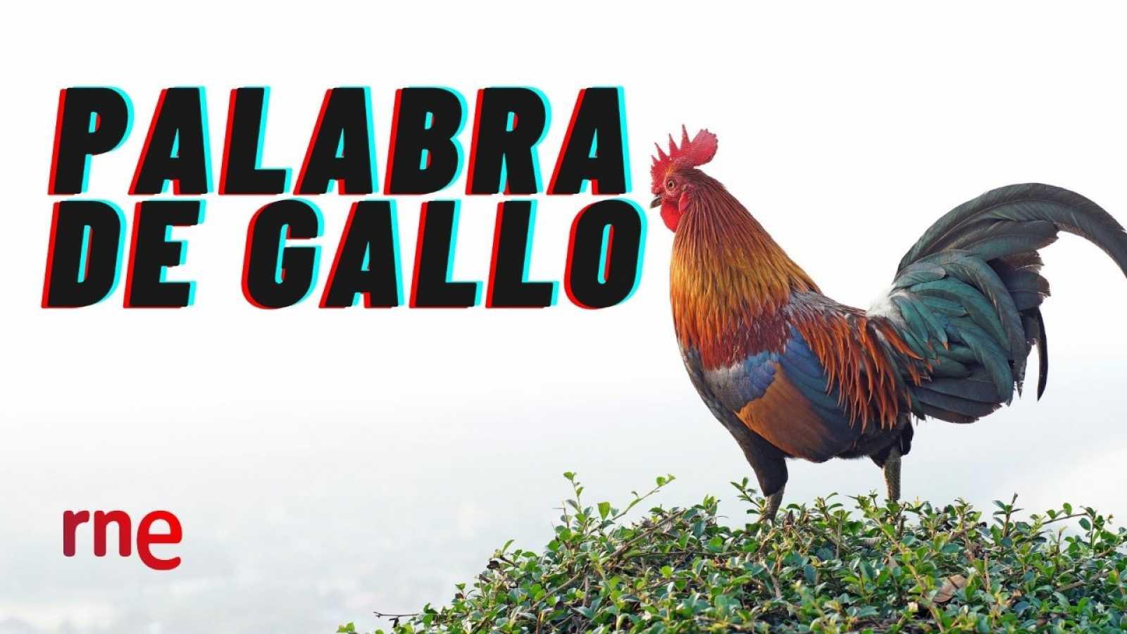 El gallo que no cesa - Palabra de gallo: Nuboscos y chuboscos - Escuchar ahora