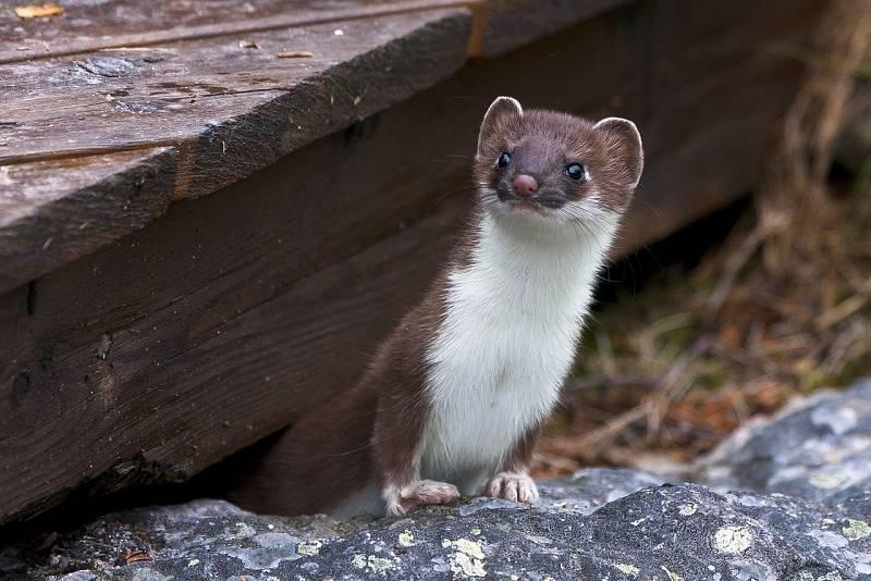 Animales y medio ambiente - Animales en las cercanías del zoo - 31/10/20 - Escuchar ahora
