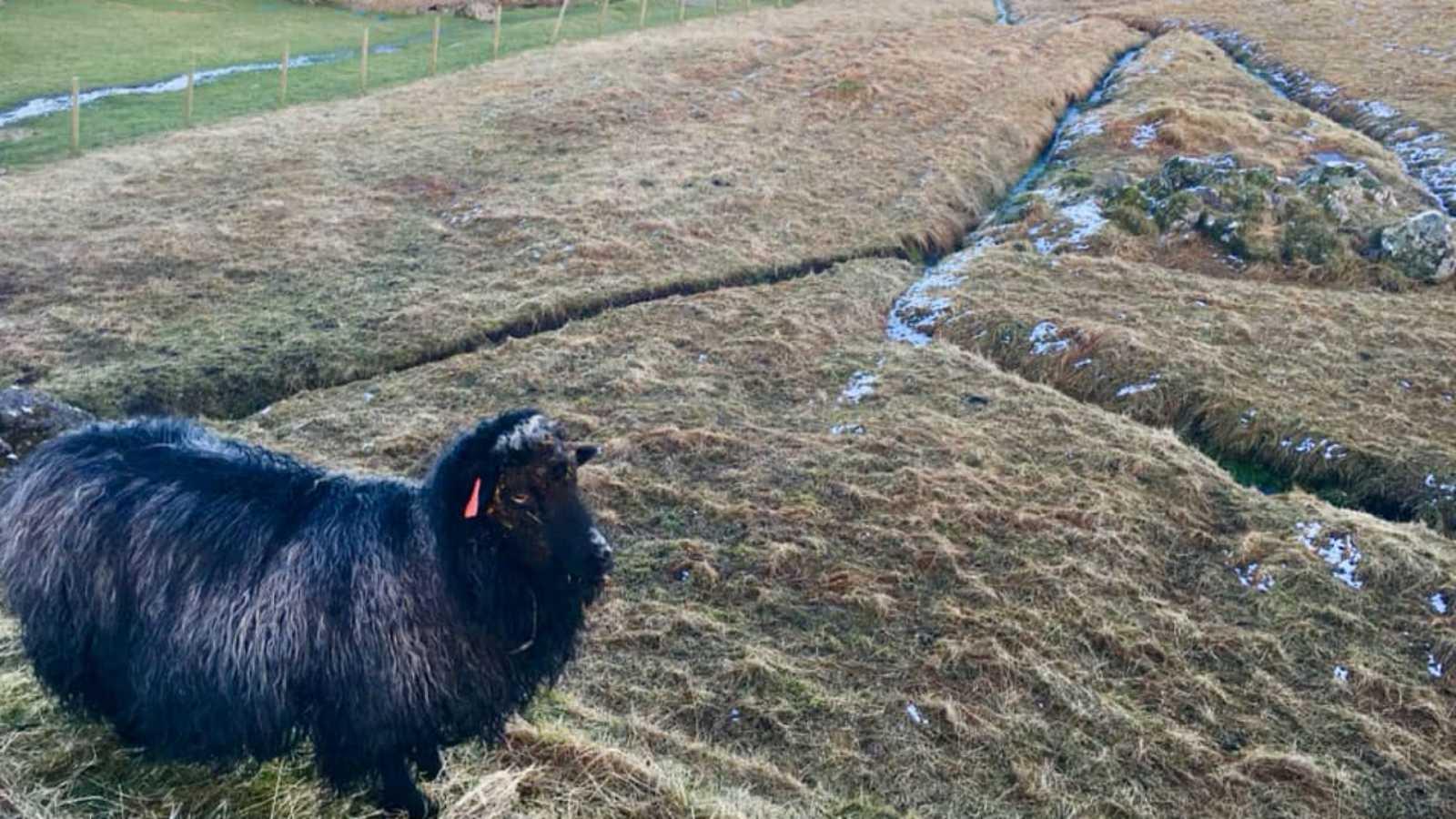 Global 5 - Islas Feroe (I): irlandeses y ovejas, primeros habitantes - 03/11/20 - Escuchar ahora