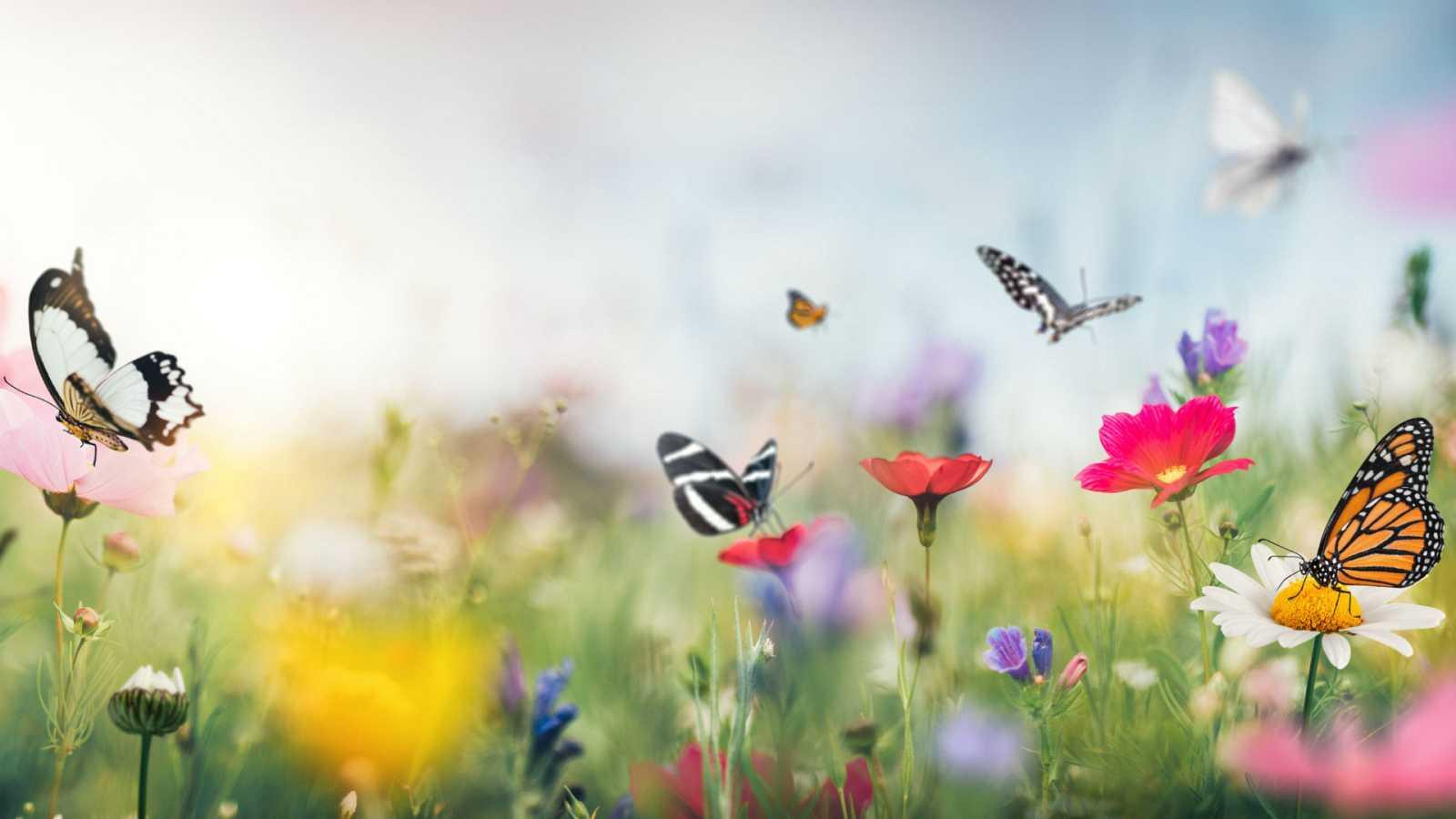 Planeta vivo - El confinamiento nos trae más mariposas - 04/11/20 - Escuchar ahora