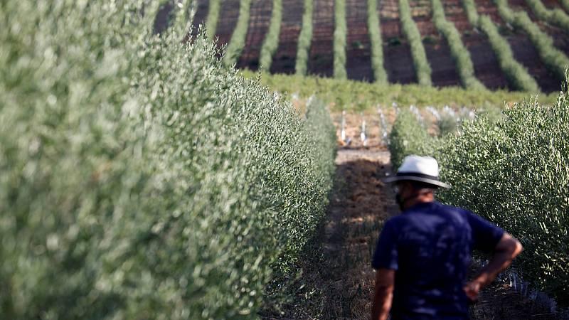 Boletines RNE - El cambio en la Casa Blanca da esperanzas al sector olivarero español - Escuchar ahora