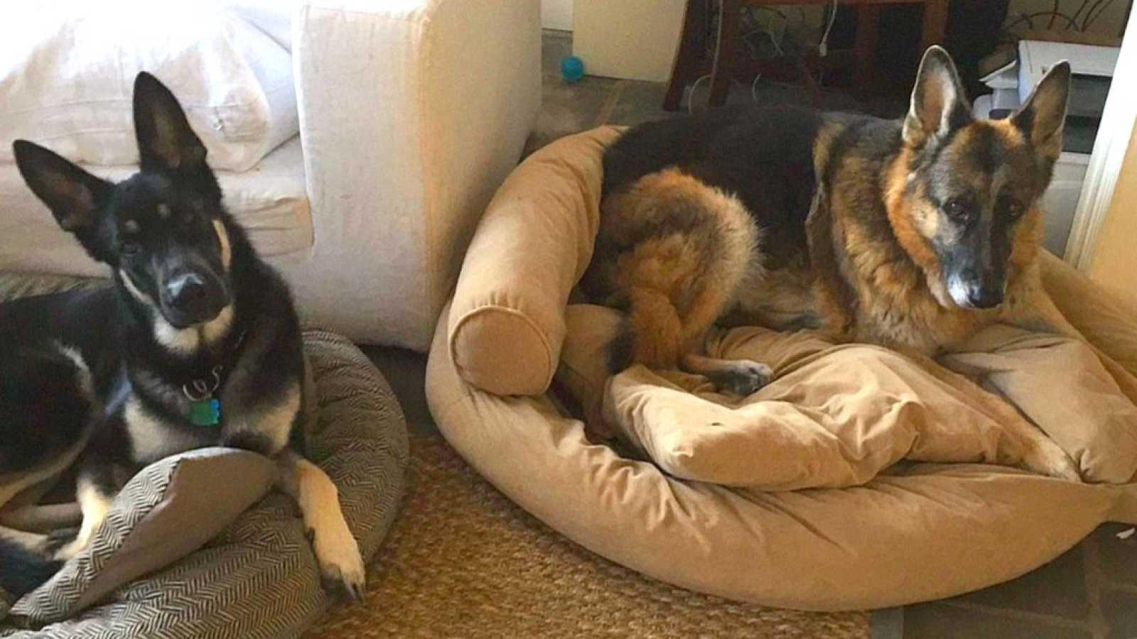 Cinco pistas - Una historia de perretes presidenciales - 11/11/20 - escuchar ahora