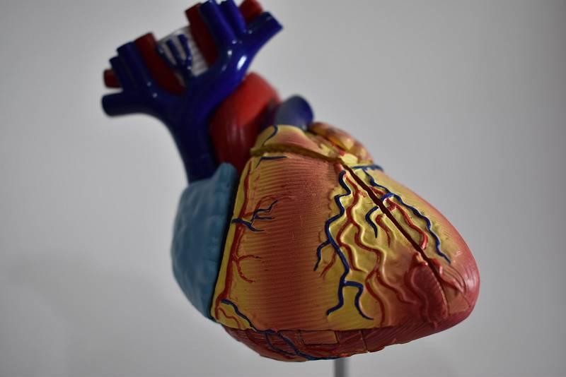 Entre probetas - El corazón: ese músculo tan desconocido - 10/11/20 - Escuchar ahora