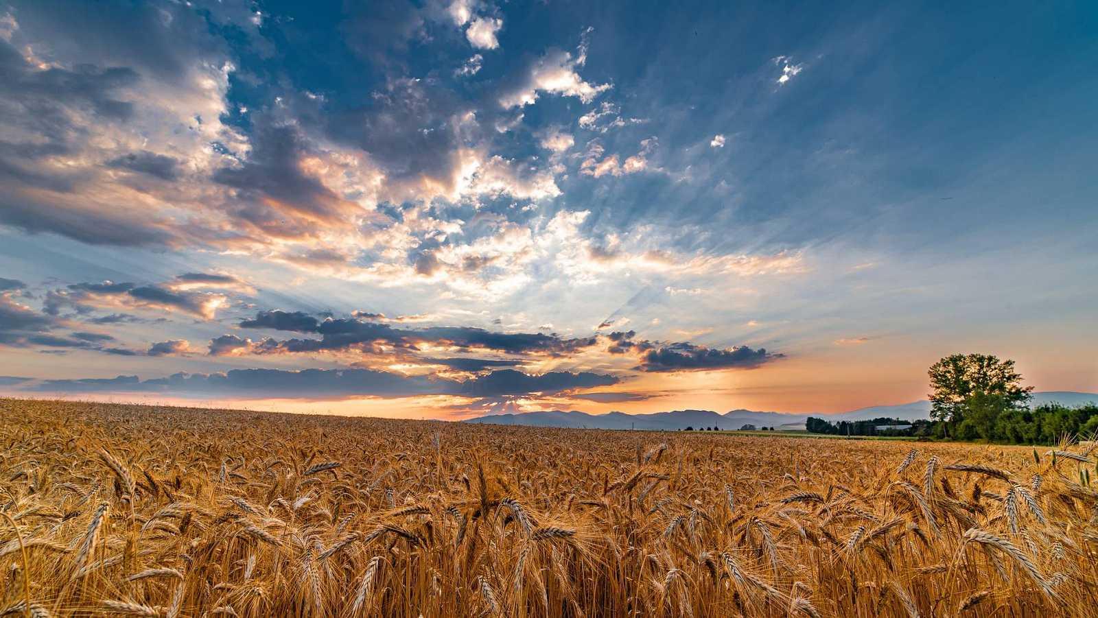 Reserva natural - Trigo para combatir el cambio climático -  26/11/20  - Escuchar ahora
