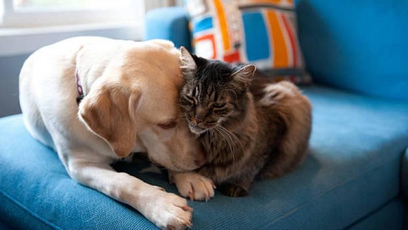 Artesfera - Día Internacional de los Derechos de los Animales - 10/12/20 - escuchar ahora