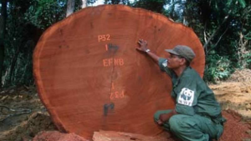 África hoy - WWF publica un informe sobre sus violaciones de derechos humanos en Congo - 10/12/20 - escuchar ahora