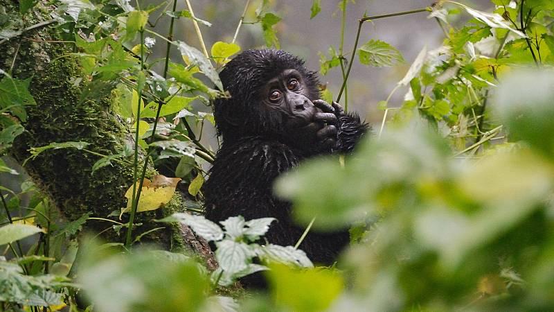 Nómadas - Uganda, un espejo salvaje - 05/12/20 - escuchar ahora