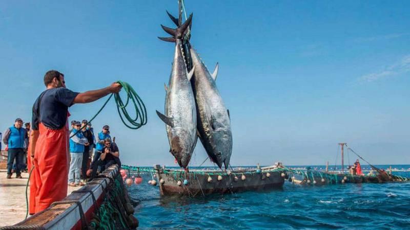 Españoles en la mar - La producción de atún rojo en cautividad - 04/01/21 - escuchar ahora