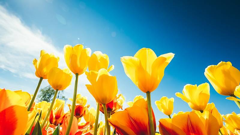 Sinfonía de la mañana - La primera misa de Vivaldi - 22/12/20 - escuchar ahora