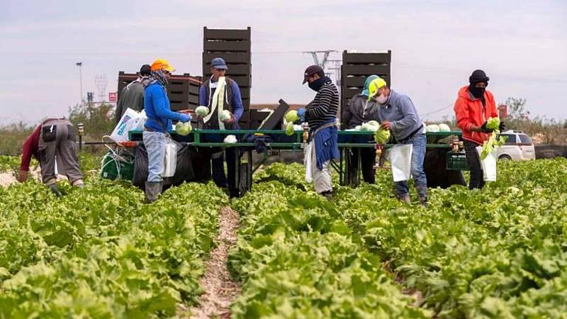 14 horas Fin de semana - Satisfacción en el sector hortofrutícola por el acuerdo con Reino Unido que les ahorrá más de 60 mil millones en aranceles - Escuchar ahora