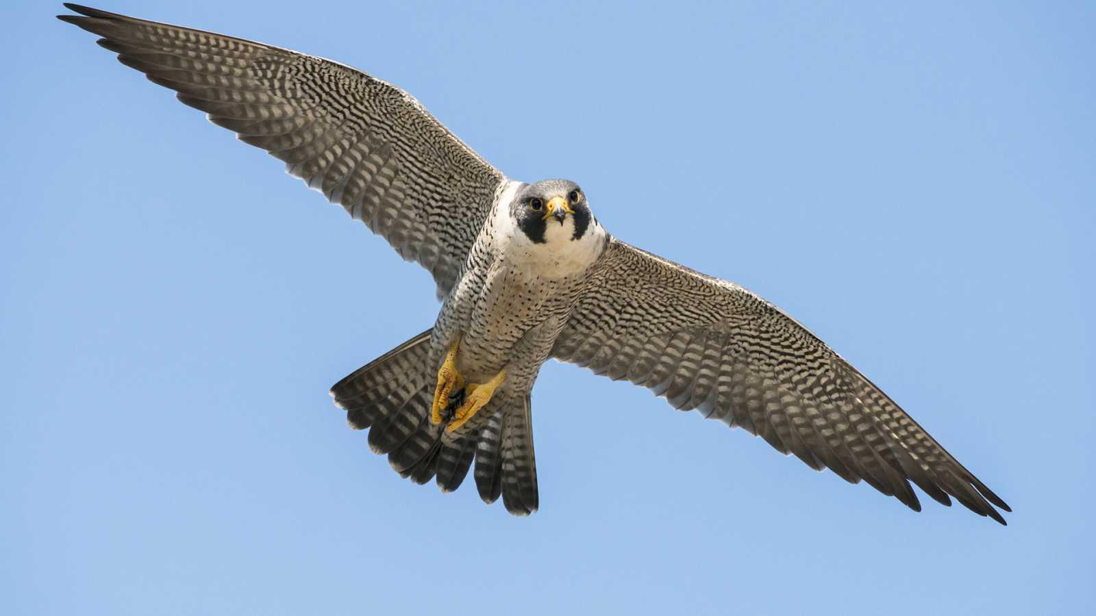 En clave Turismo - Avistamos halcones - 29/12/20 - escuchar ahora