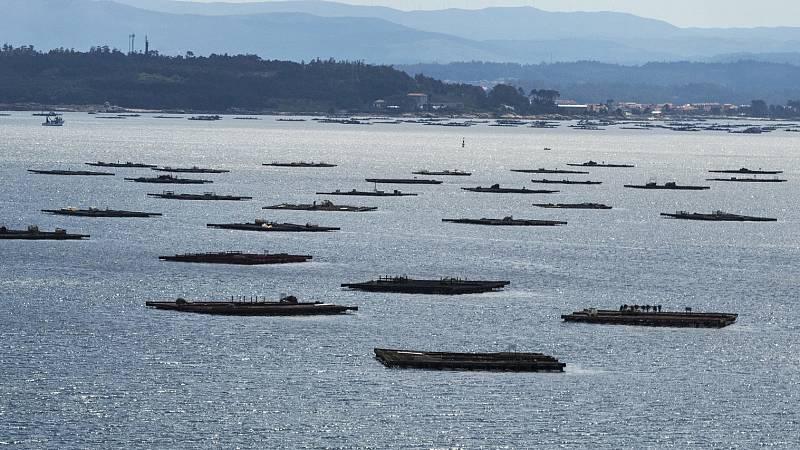 Españoles en la mar - Acuicultura de España. Plan Estratégico de Comunicación de la Acuicultura - 21/01/21 - Escuchar ahora