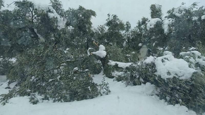 Las mañanas de RNE con Íñigo Alfonso - Filomena causa estragos en el olivar de Aragón  - Escuchar ahora