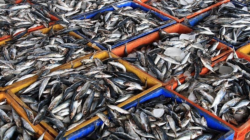 Españoles en la mar - Un agujero en la mar, la sobrepesca - 18/01/21 - escuchar ahora