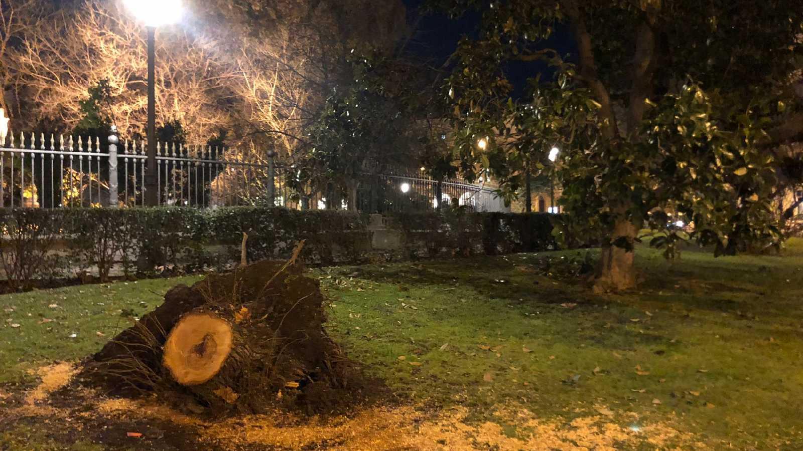 24 horas - Filomena vive todavía en los destrozos de algunos parques - Escuchar ahora