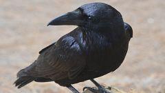 Videodrome - La magia del cuervo de Odín - 24/01/21