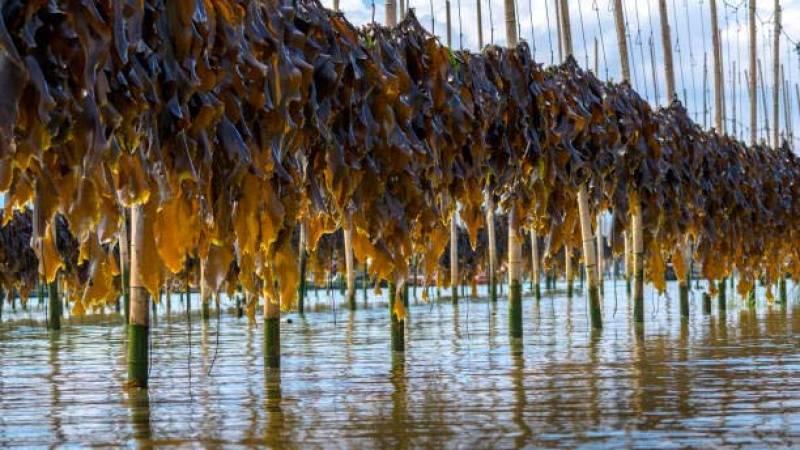Españoles en la mar - La industria de las algas en España - 22/01/21 - escuchar ahora