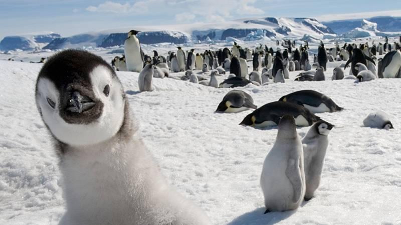 Hoy empieza todo con Marta Echeverría - Apadrina un pingüino y aprópiate de varias películas - 25/01/21 - escuchar ahora