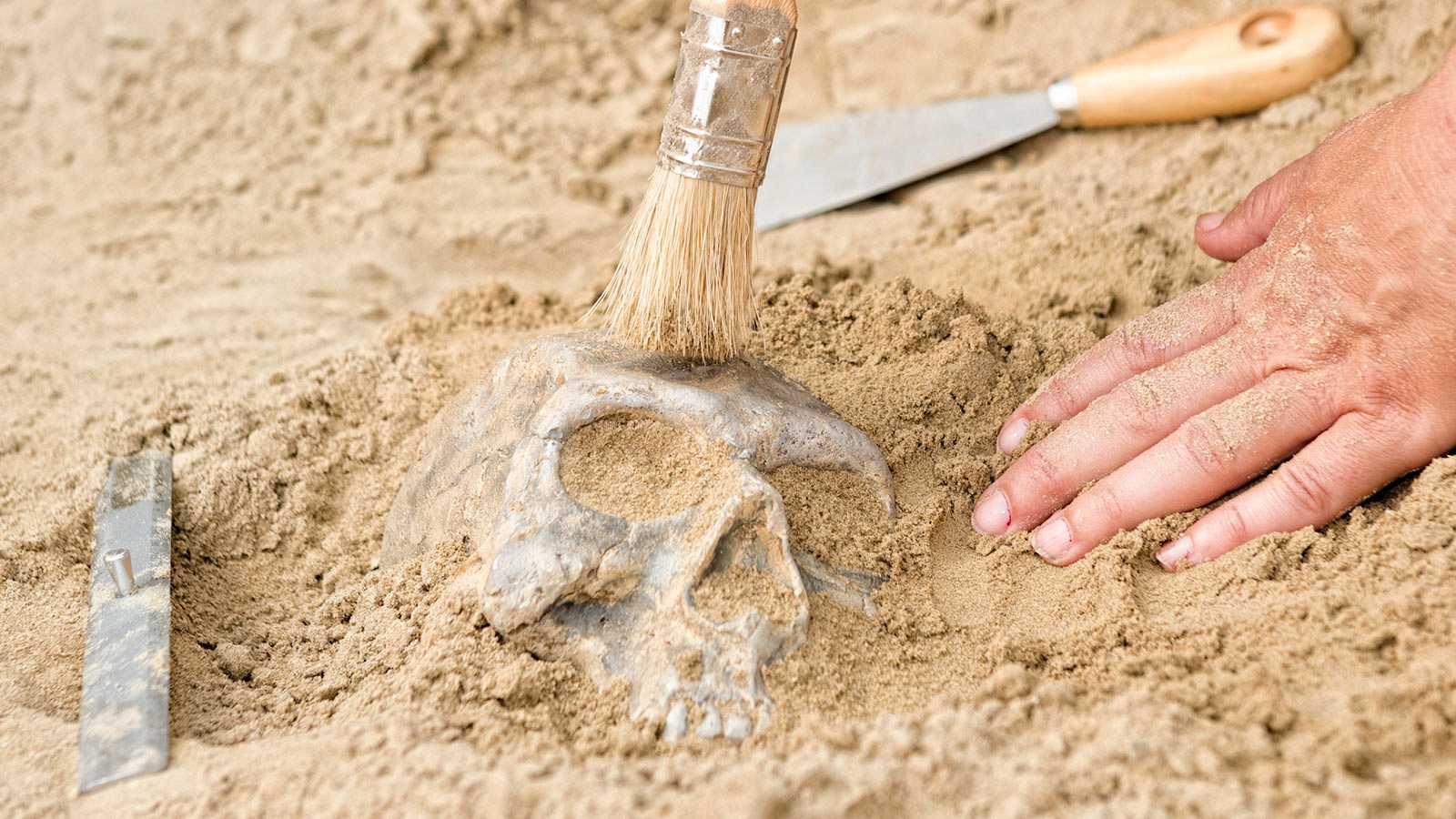 Després del col·lapse - Atapuerca Patrimoni de la Humanitat - 28/01/21 - escolatar ara
